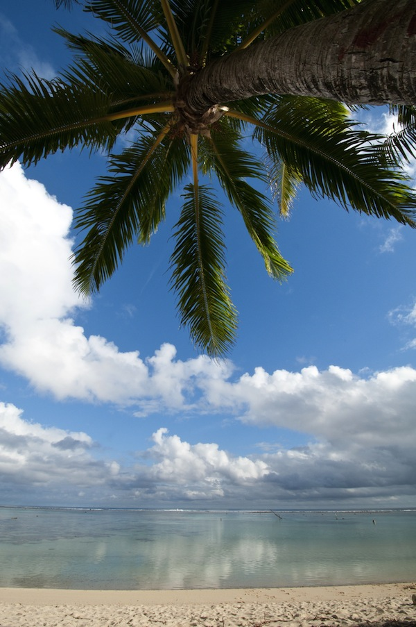 14. Pacific Resort Rarotonga - Palm Trees
