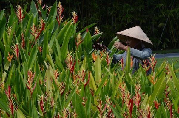 Vietnam - man w flowers (DSC_1327)
