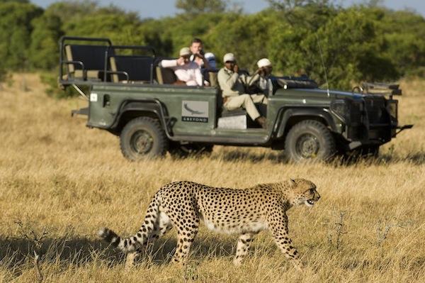 FC Safari - Ngala game drive w cheetah kopia