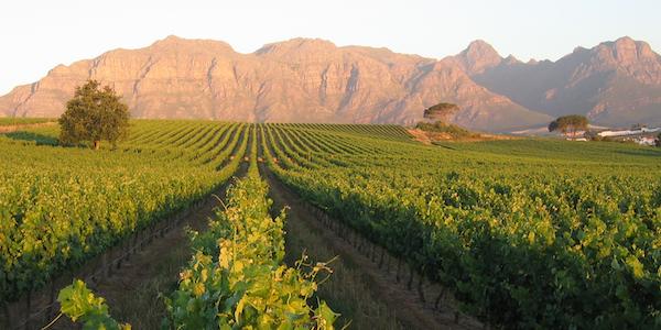 KZ-Vineyards