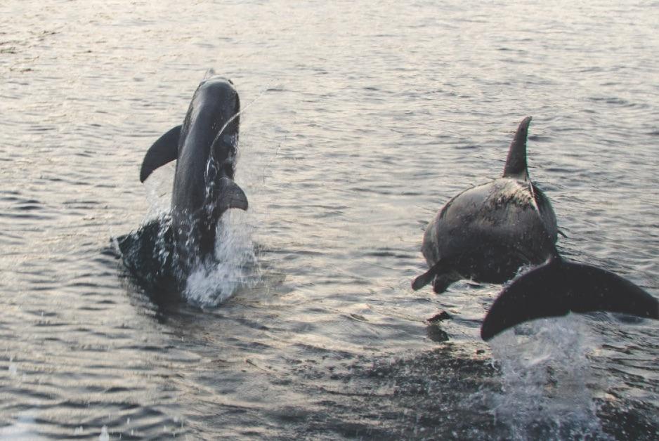 Kryssning-delfiner (DSC_6771)