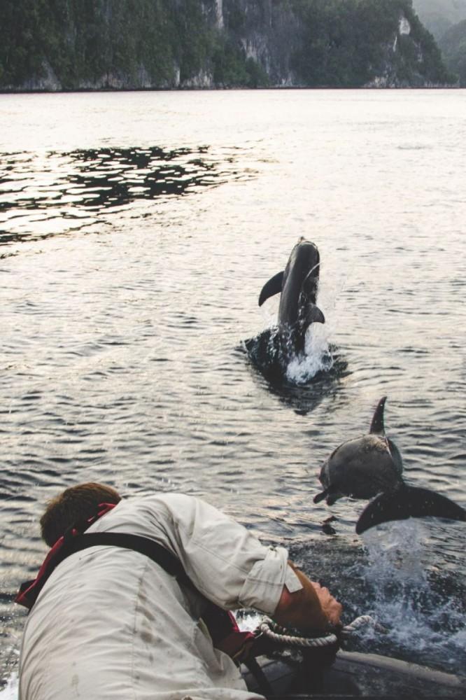 Kryssning-delfiner från båt (DSC_6771 B)