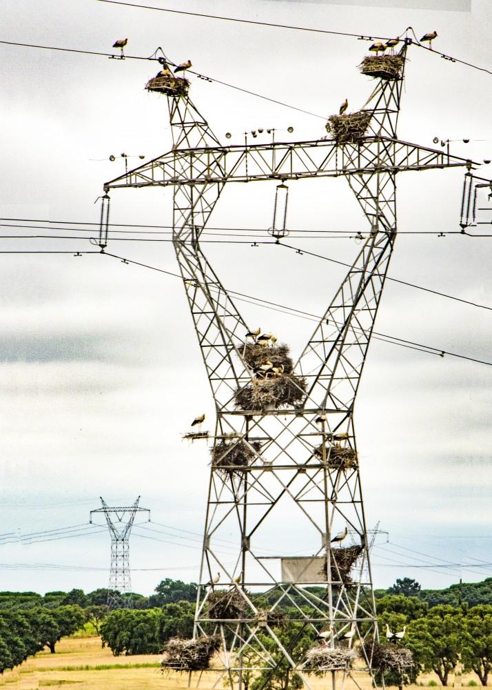 Portugal Alentejo - Storks nests (16E1169)
