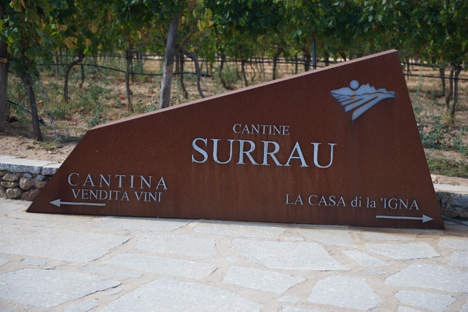 Sardinien - Vingård