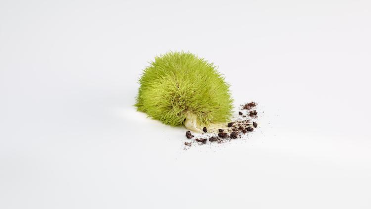 Spanien - Mugaritz, Teselas vegetales. Un manojo de semillas y brotes de teff.